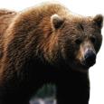 Pragmatic Bear picture