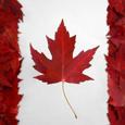 Maple Markets picture