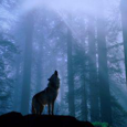 Gray Wolf Research picture