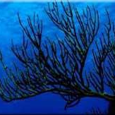 Black Coral Research picture