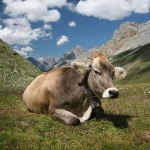 COW Has Not Delivered In 2009