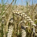 Grain ETFs Have Plummeted In 2009