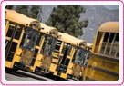 FirstGroup/First Student school busses