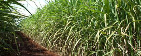 Raízen Ethanol Production Facts