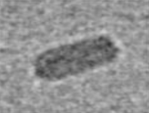 SNS01-T nanoparticle ~ 40 x 70 nM.