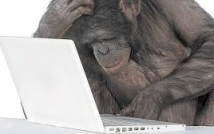 chimp at computer