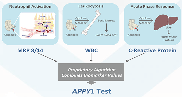 Application of Multiple Biomarkers Leads to Improved Performance
