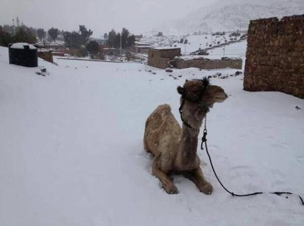 Global Cooling--snow in Cairo